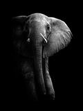 Elephant! Lámina fotográfica por  WildPhotoArt