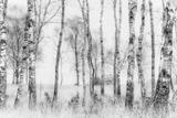 Svart/hvitt Fotografisk trykk av Nel Talen