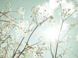 Sommerträume Giclée-Druck von Assaf Frank