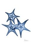 Blue Trio Starfish Kunstdruck von Albert Koetsier