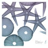 Lavender Dipped Starfish 2 Kunst von Albert Koetsier