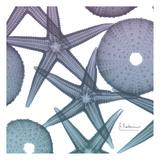 Lavender Dipped Starfish 1 Poster von Albert Koetsier