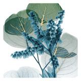 Golden Lilly Of Eucalyptus 2 Poster von Albert Koetsier