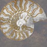Nautilus I Print by Mark Chandon