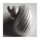 Snail Sea Shell Posters by John Harper