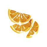 Citrus Segments Print by Kristine Hegre