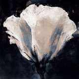 Lisianthus Sketch Prints by Malcolm Sanders