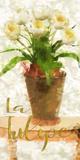 La Tulipe Posters by Taylor Greene