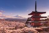 Mount Fuji Blossom Prints