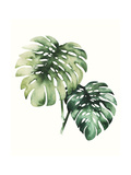 Tropical Plant II Premium Giclee Print by Grace Popp