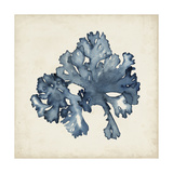 Seaweed Specimens IX Premium Giclee Print by Naomi McCavitt