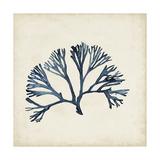 Seaweed Specimens XI Premium Giclee Print by Naomi McCavitt