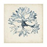 Seaweed Specimens X Premium Giclee Print by Naomi McCavitt