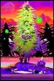 Weed Gnomes Kunstdrucke