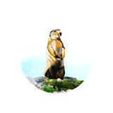 Brown Beaver on Rock Lámina giclée prémium por Sarah Jackson