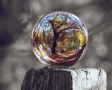 Pop of Color Glass Sphere Plakater av  Color Me Happy