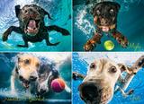 Underwater Dogs: Splash 1000 Piece Puzzle Jigsaw Puzzle