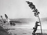 Man Holding onto Tree during Hurricane Carol Reproduction photographique par  Bettmann
