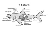 Shark Anatomy Diagram Prints