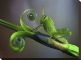Saltamontes Stretched Canvas Print by Jimmy Hoffman