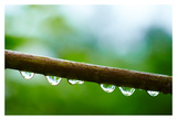 Drops of water I Prints by Peter Morneau