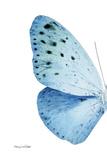 Miss Butterfly Euploea - X-Ray Left White Edition Fotoprint van Philippe Hugonnard