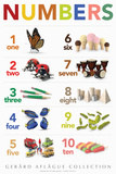 Lehrposter - Numbers  Poster von  Gerard Aflague Collection
