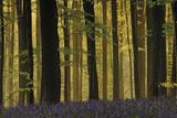 Deep in the Forest Giclee-trykk av  Wild Wonders of Europe