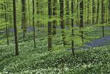 Woodland Escape Giclee-trykk av  Wild Wonders of Europe