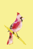 Paintbox Birds - Joy Posters by Kristine Hegre
