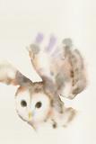 Forest Odyssey - Owl Print by Kristine Hegre