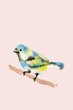 Paintbox Birds - Wish Prints by Kristine Hegre