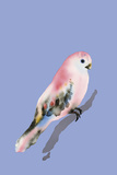 Paintbox Birds - Love Posters by Kristine Hegre
