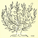 The Bush (Small) Zeefdruk van Henri Matisse