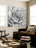 Garden Succulent IV Poster by Laura Marshall