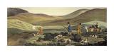 Caccia al gallo cedrone Edizioni premium di Henry Alken