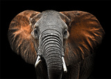 Shadowy Elephant Affiches