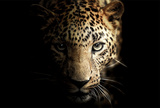 Shadowy Leopard Poster