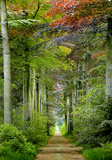 Forest Canopy Plakater