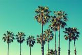 Palm Trees at Santa Monica Beach. Vintage Post Processed. Fashion, Travel, Summer, Vacation and Tro Fotografie-Druck von  mervas