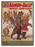 Barnum & Bailey Circus - Greatest Show on Earth - Bears that Dance Kunst von  Pacifica Island Art
