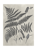 Vintage Fern Study IV Posters by Vision Studio