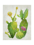 Cacti Collection II Premium Giclee Print by Chariklia Zarris