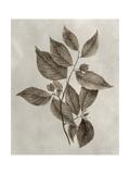 Arbor Specimen III Prints by Vision Studio