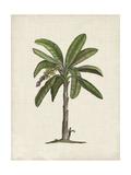 British Palms II Reproduction giclée Premium par Naomi McCavitt