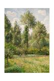 Poplars, Eragny Posters par Camille Pissarro