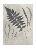 Vintage Fern Study II Posters by Vision Studio