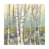 Kaleidoscope Birches II Plakat af Jennifer Goldberger