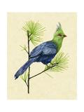 Green Turaco I Affiches par Melissa Wang