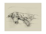 Dog Days II Premium Giclee Print by Ethan Harper